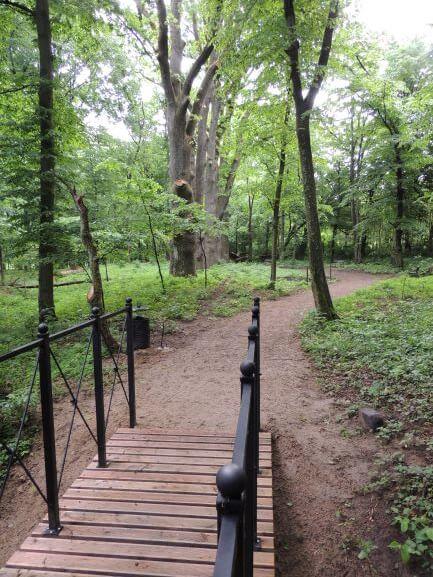 Mostek ipięć dębów -pomników przyrody