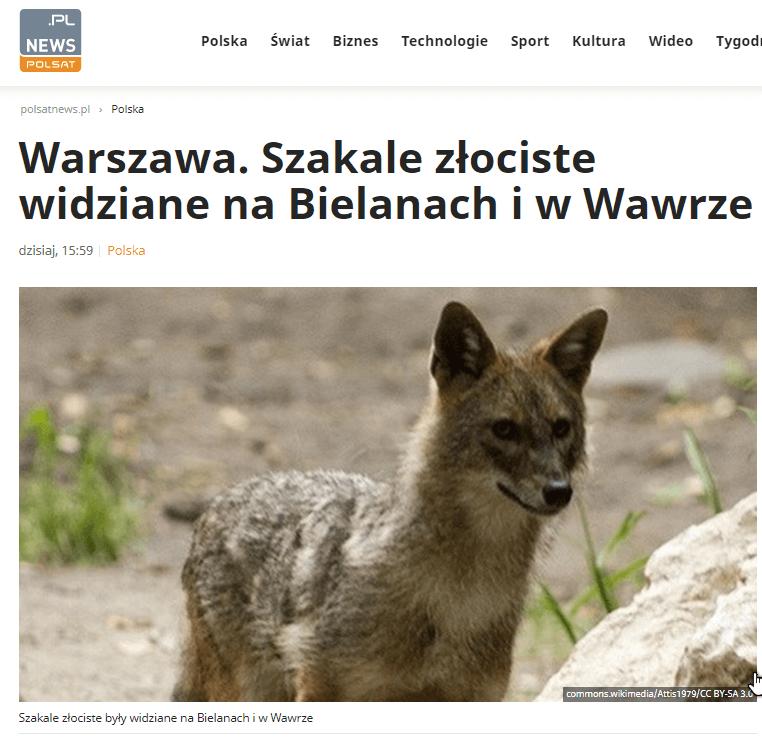 Warszawskie szakale