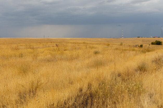 sucha-trawa-na-stepie-pustynny-krajobraz-kazachstan_79152-861 (1)