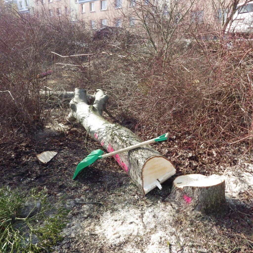 Olsztyńska masakra piłą mechaniczną