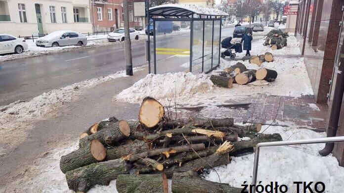 Olsztyn-wycinka-drzew TKO